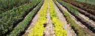 הדשא של השכן, נימפיאה משתלה [וקפה קטן], מושב תומר