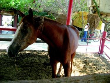 עצור סוסים! חוות סוסים קיבוץ קליה