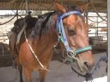 רוץ בן סוסי, חוות תחיה חוות סוסים, יתיר